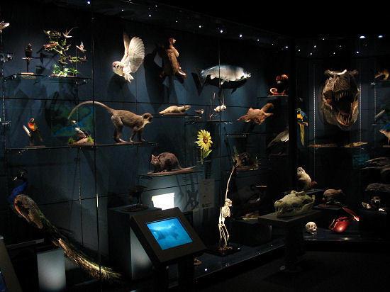 weston park museum sheffield museum lighting design